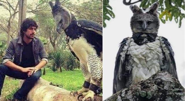 """Naturaleza Pregunta Trivia: ¿De qué país es el ave nacional """"El águila harpía""""?"""