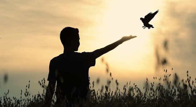 Naturaleza Pregunta Trivia: ¿Qué ave puede recordar caras humanas por lo menos hasta 5 años?