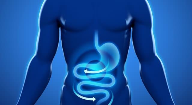 Сiencia Pregunta Trivia: ¿Qué término se usa para describir el proceso de conversión de los alimentos en energía en un organismo?