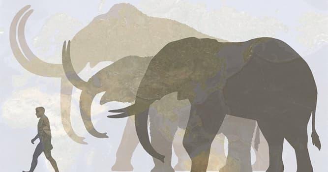 Naturaleza Pregunta Trivia: ¿Qué animal tiene de ancestro al extinto Paraceratherium?