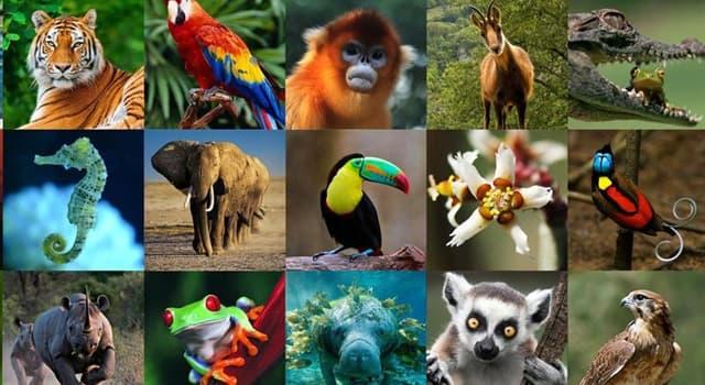 Naturaleza Pregunta Trivia: ¿Qué tipo de animal es el sapenco o burgajo?