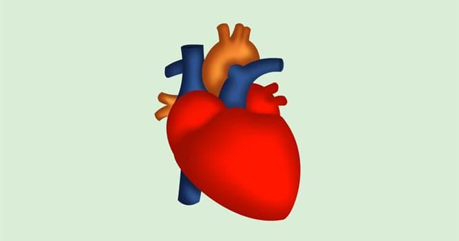 Сiencia Pregunta Trivia: ¿Cuántas capas posee la pared del corazón humano?