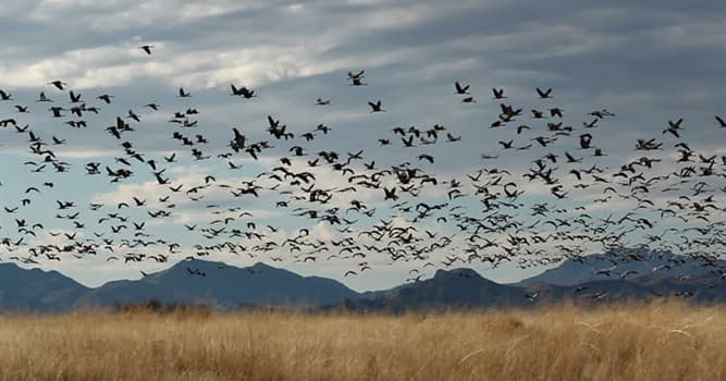 Nature Trivia Question: Which bird genus can be found in Africa only?