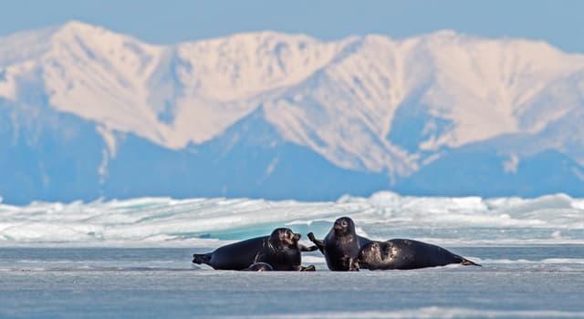 """Geografía Pregunta Trivia: ¿Qué lago es conocido como el """"ojo azul de Siberia""""?"""
