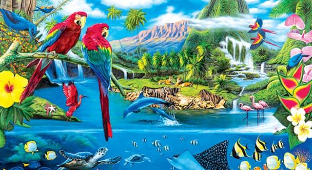 Naturaleza Pregunta Trivia: ¿Cuál de las siguientes aves tiene el pico más largo?