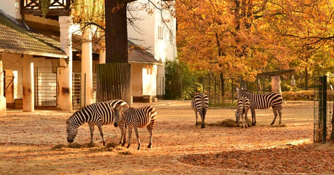 Nature Trivia Question: Which zoo presents one of the most comprehensive collections of species in the world?