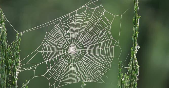 Natur Wissensfrage: Woraus besteht ein Spinnennetz?