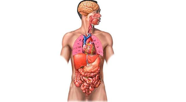 Сiencia Pregunta Trivia: ¿A la inflamación de qué parte del cuerpo se la llama estomatitis?