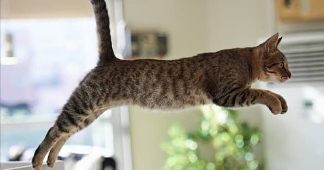 Naturaleza Pregunta Trivia: ¿Cuántas vértebras componen la columna de un gato?