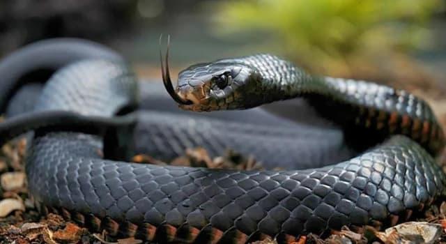 Naturaleza Pregunta Trivia: ¿De dónde es originaria la serpiente el taipán de la costa considerada una de los más devastadoras del mundo?