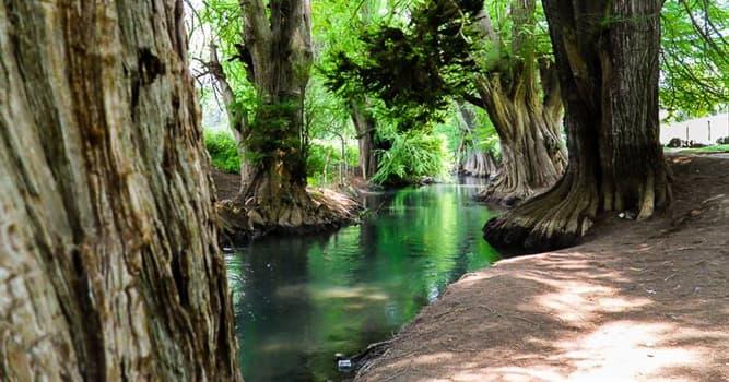 Naturaleza Pregunta Trivia: ¿De qué país es nativo el árbol llamado ahuehuete, sabino o tule?