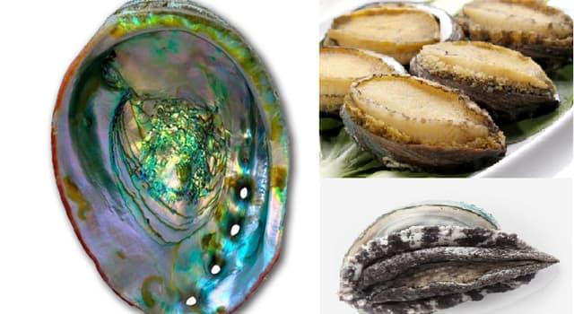 """Naturaleza Pregunta Trivia: ¿En qué países es muy apreciado el molusco """"Haliotis""""?"""