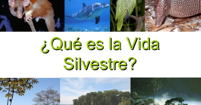 """Naturaleza Pregunta Trivia: ¿Qué animal es el símbolo de la """"Fundación Vida Silvestre Argentina""""?"""