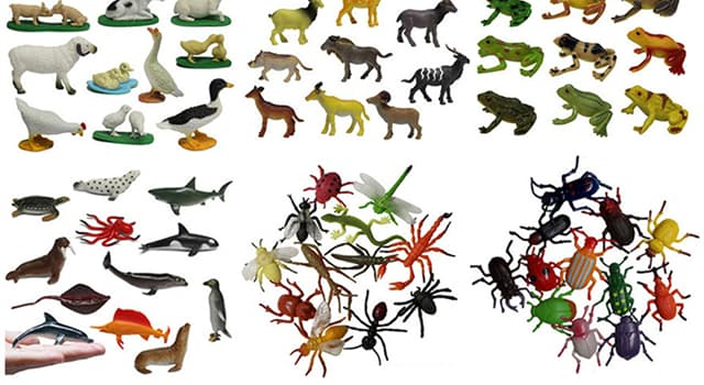 Naturaleza Pregunta Trivia: ¿Qué animal tiene la menor cantidad de cromosomas?
