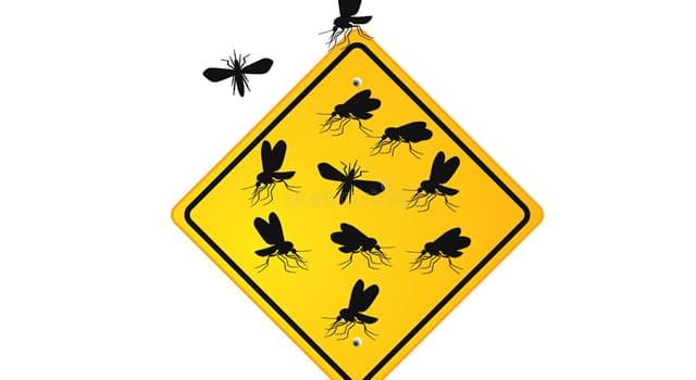 Сiencia Pregunta Trivia: ¿Qué insecto es el principal transmisor de leishmaniasis y de la bartonelosis?