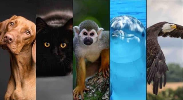 Naturaleza Pregunta Trivia: ¿Qué rama de la biología estudia a los animales?