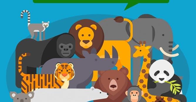 Naturaleza Pregunta Trivia: ¿Qué tienen en común el wombat del norte, la gacela dama y el rinoceronte negro?
