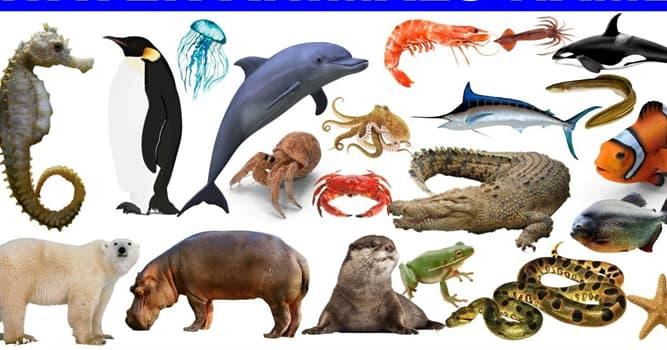 Naturaleza Pregunta Trivia: ¿Qué tipo de animal es el mocasín de agua?