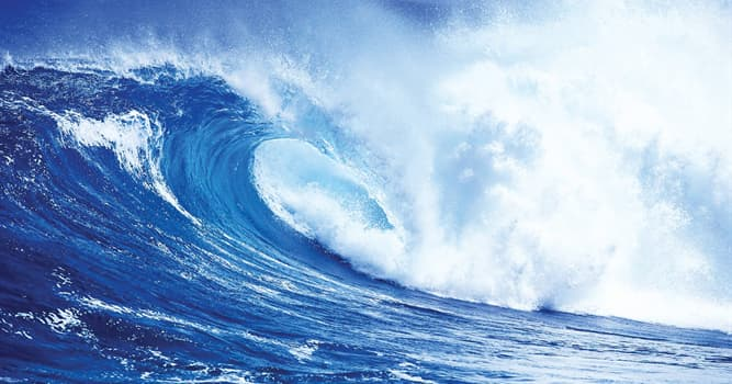 Natur Wissensfrage: Welches Tier gilt als giftigstes Meerestier der Welt?