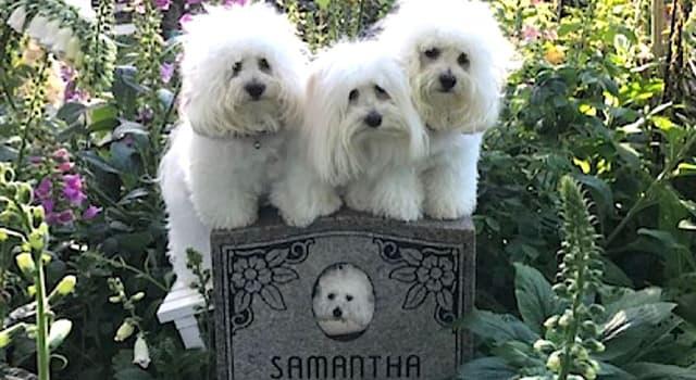 Sociedad Pregunta Trivia: ¿Qué celebridad clonó dos veces a su perro?