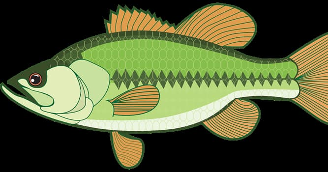 Naturaleza Pregunta Trivia: ¿Cuál es la manera principal en se mueven los peces?