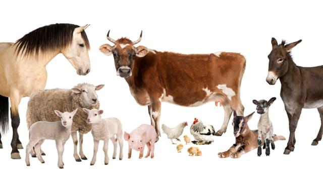 Naturaleza Pregunta Trivia: ¿Qué animal doméstico tiene una raza llamada Brangus?