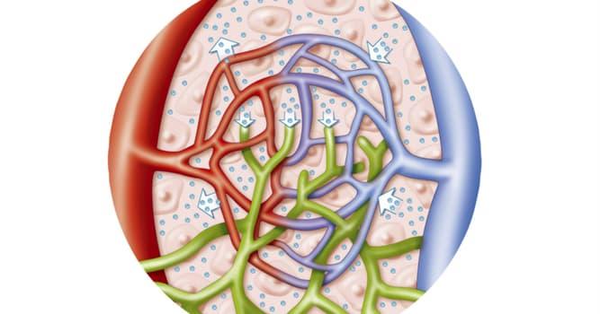 Сiencia Pregunta Trivia: ¿Cuál es una fina capa de fluido que rodea las células del cuerpo y está asociada al metabolismo?