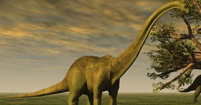 """Naturaleza Pregunta Trivia: ¿En cuántas especies se clasifican en la actualidad los """"Brontosaurus""""?"""