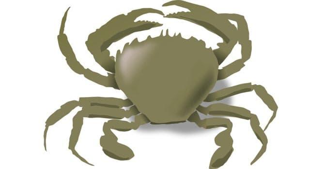 Naturaleza Pregunta Trivia: ¿Qué característica especial tiene el cangrejo Heike?