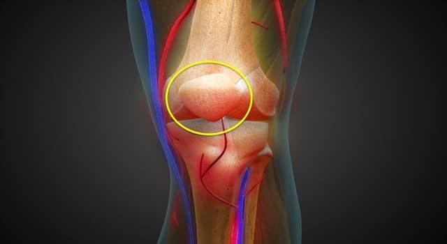 Сiencia Pregunta Trivia: ¿Cómo se llama el hueso de la rodilla que la imagen muestra rodeado en amarillo?