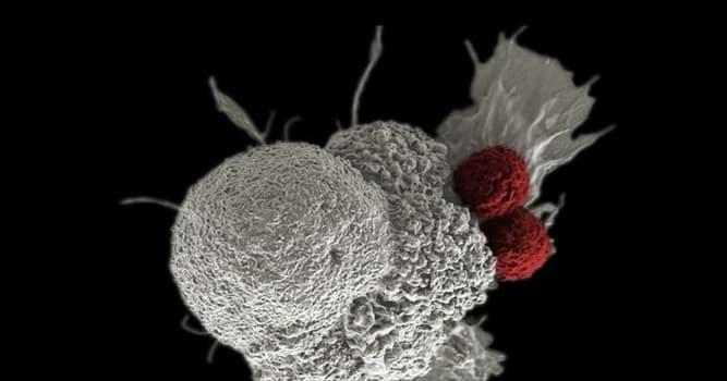 Сiencia Pregunta Trivia: ¿Qué son las células zombie?